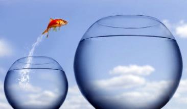 fishbowl
